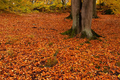 Tree in park in autumn Royalty Free Stock Image