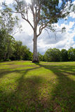 Tree in park royalty free stock photo