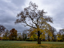 A tree in the park. In the castle garden royalty free stock image