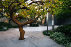 Tree in a park, in downtown Los Angeles  Stock Photos