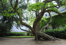 Tree in the park of fairy tales. Royalty Free Stock Photos