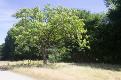 Tree in Park. Green Tree with meadow closeup Royalty Free Stock Images