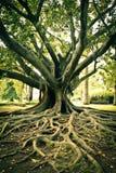 Tree. Tree at a Park in Lisbon stock photo