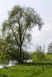 Tree in the park near the Warta river shore. High tree in the park near the Warta river shore and chimney on the right, Poznan, Poland stock images