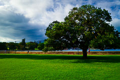 Tree in the Park nearly of Circular Quay. Green and blue together,It's  attract people running here every morning Royalty Free Stock Images
