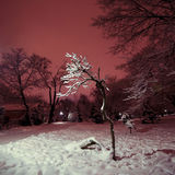 Tree in the park at night. Illuminated by the light from the lantern Royalty Free Stock Photo