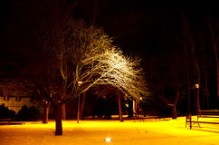 Tree In the park at night. Park in the evening time,tree lit lantern light Royalty Free Stock Photos