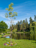 Tree in a Park with a Pond Royalty Free Stock Photo