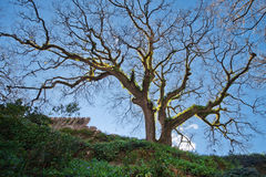 Tree in the park Quinta da Regaleira. Great park. Walking in the park Quinta da Regalera Royalty Free Stock Photography