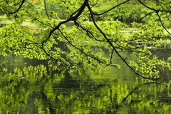 Tree in park reflected in pond stock photos