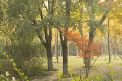 The tree in the park Royalty Free Stock Photography