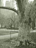 Tree in park and skyscrapers, nyc. Trees in central park nyc with skyscrapers in back in sepia stock photography