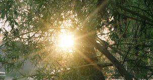 Tree in park with sunrise on background, warm color with sunflares. Tree in park with sunrise light on background, warm color with sunflares stock footage