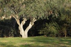 Tree in park of Valencia Stock Image