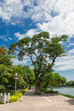 Tree in the parks. Blue green thailand asian beauty Stock Photos