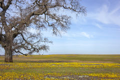 Tree, Pasture, Spring Stock Images