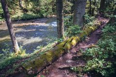 Prielom Hornadu trail in Slovak Paradise stock image