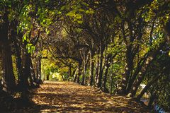 Tree path in a forest in a fall. royalty free stock photography