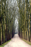 Tree path Royalty Free Stock Photos