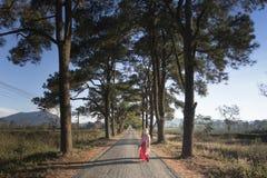 Tree, Path, Sky, Woody Plant Stock Photo