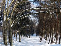 Tree and path in winter, Lithuania stock photo