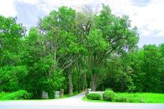 Tree pathway Stock Photo