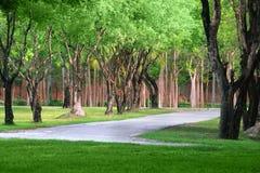 Tree pathway Royalty Free Stock Image