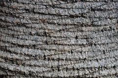 Tree pattern background Stock Photos