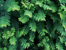 Tree pattern and bright green foliage Stock Images