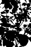 Tree Pattern Silhouette. A black and white cutout abstract image of the patter of a leafy tree sapling Stock Images
