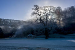 Tree and pavilion at sunrise close to a steaming river Stock Photos
