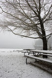 A tree and pcnic tables in winter. A tree and picnic tables sit in an empty park in winter Stock Image