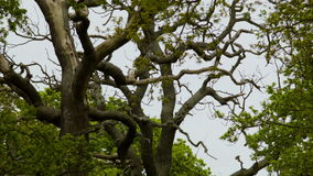 A tree at a peaceful afternoon, Richmond Park stock footage