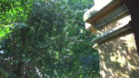 Tree in a Peaceful Leafy Garden. Freshly Mown Lawn and Tree in a Peaceful Leafy Garden stock video