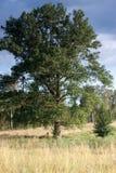 Tree. Peaceful rural landscape (Masuria, Poland Royalty Free Stock Photo