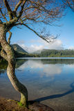 Tree by peacefull lake Royalty Free Stock Photography