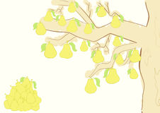 Tree with pears Royalty Free Stock Image