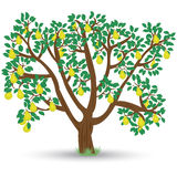 Tree with pears royalty free illustration