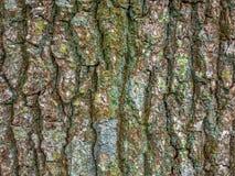 Tree peel Stock Images