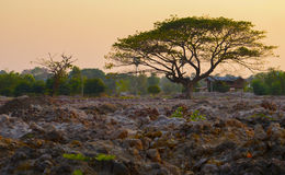 Tree of philosophy. At sunset Stock Photo