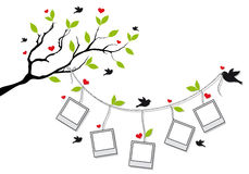 Tree with photo frames and birds, vector. Tree branch with blank photo frames and birds, vector background Royalty Free Stock Photo
