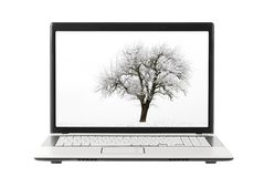 Tree photo on laptop display. High key shot of a single apple tree in winter, displayed on a laptop screen stock photo