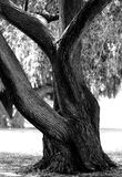 Tree Photos in a Park. Tree photos from a park in Orange County, California Stock Photography