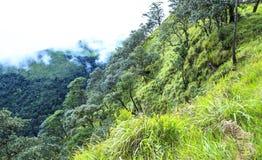 tree at Phusoidao mountain Stock Images