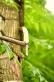 Tree pictures . stock photo