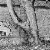 Tree. Pieten of old tree Stock Photos