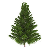 Tree pine isolated. Royalty Free Stock Photos