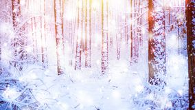 Tree pine spruce in magic forest winter with falling snow sunny day. Snow forest snowfall. Christmas Winter New Year background trembling scenery. Cinemagraph stock video footage