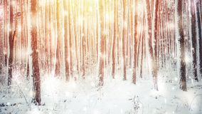 Tree pine spruce in magic forest winter with falling snow sunny day. Snow forest snowfall. Christmas Winter New Year background trembling scenery. Cinemagraph stock footage