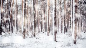 Tree pine spruce in magic forest winter with falling snow sunny day. Snow forest snowfall. Christmas Winter New Year background trembling scenery. Cinemagraph stock video